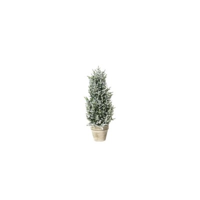 Pinetto C/vaso 40 Cm